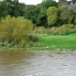 ducks-at-Wye